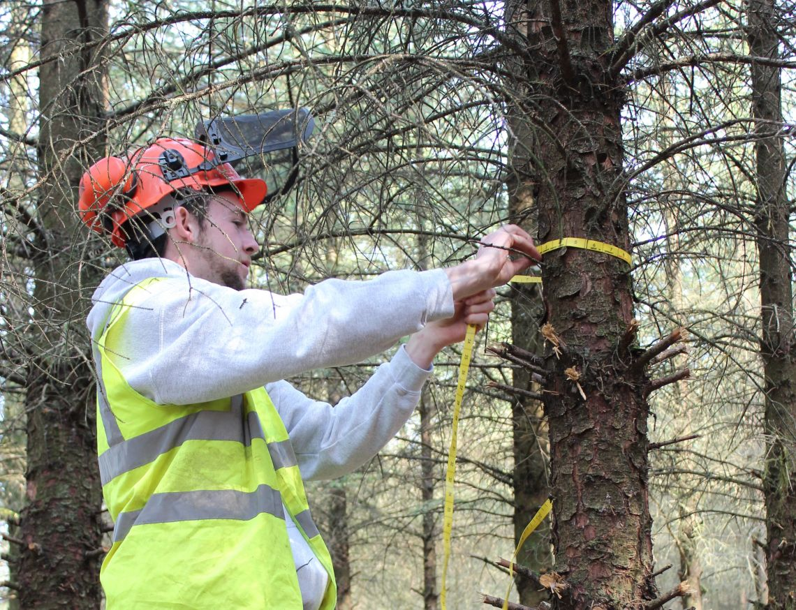A student prepares for tree felling